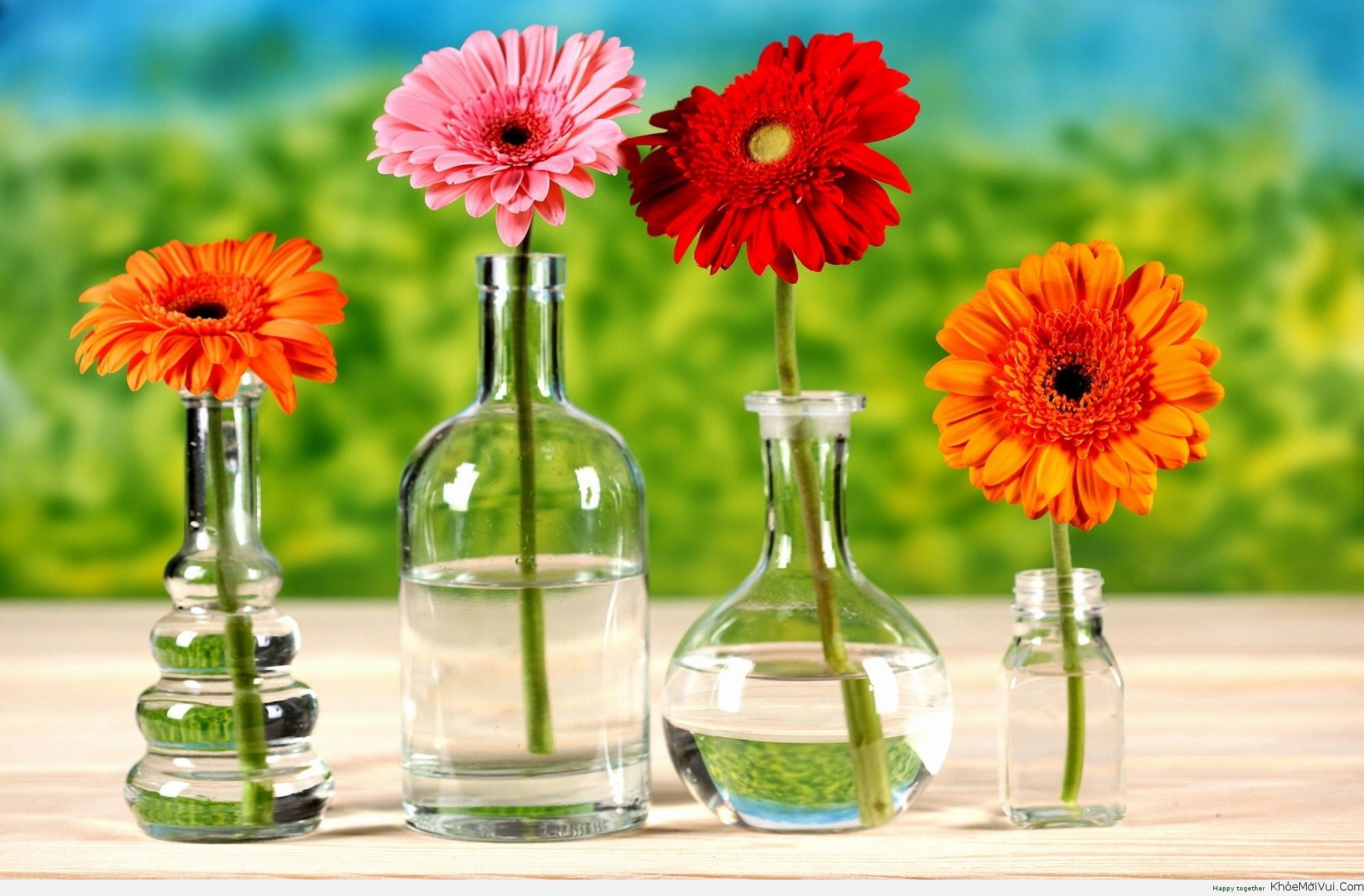 Bình hoa thuỷ tinh dạng bầu cắm hoa h1